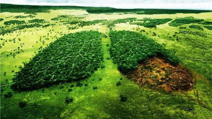 ¿Y tú que haces por el medioambiente?
