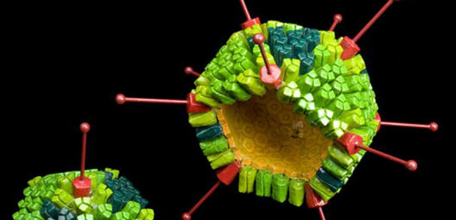 Adenovirus-Permanencias-Voluntarias